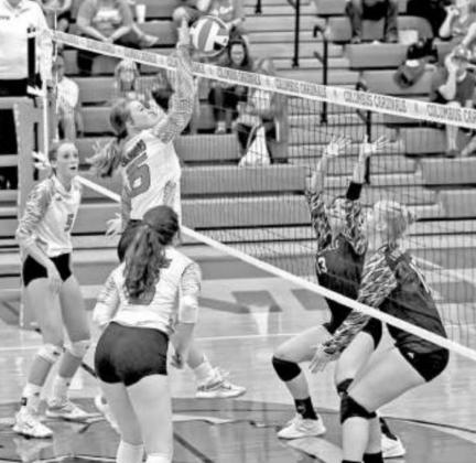 Lady Cards serve up volleyballs best served hot