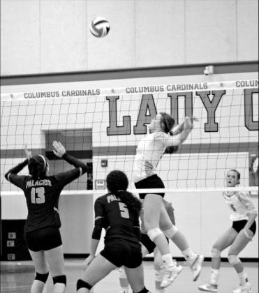 Sharks fall to Lady Cardinals in three sets