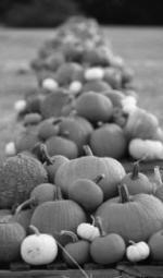 Pumpkin growers near end to challenging season